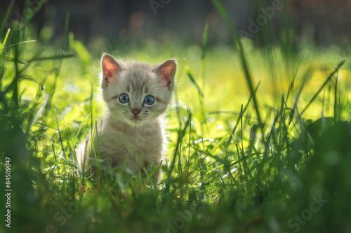 Fotografia kitten
