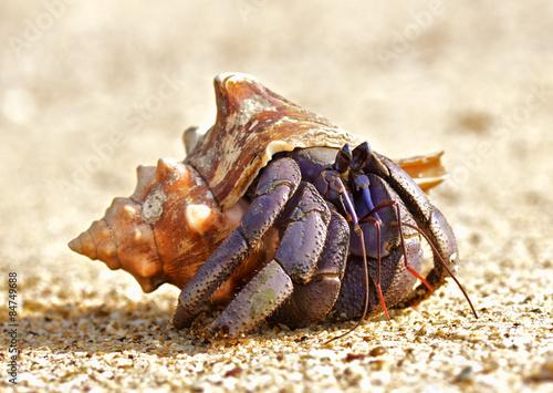Fotografia Hermit Crab