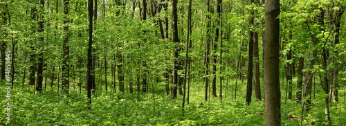 Spring tree landscape #84853645