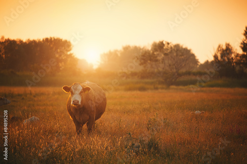 Carta da parati Cows on pasture