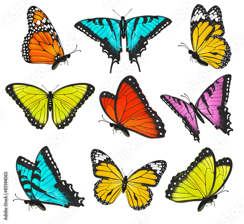Set of colorful butterflies vector illustration #85144063