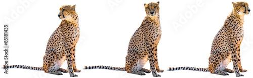 Fotografia Three cheetahs