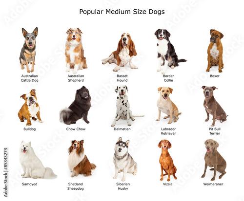 Fényképezés Collection of Popular Medium Size Dogs