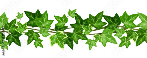 Fotografia Horizontal seamless garland with ivy leaves. Vector illustration