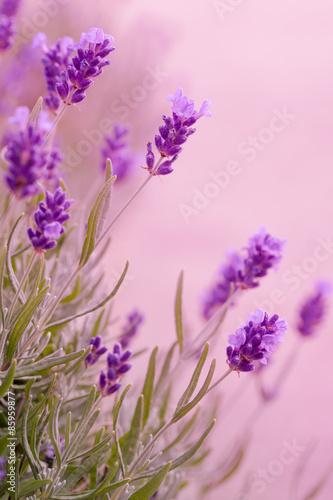 Violette Töne