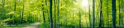 Fotografie, Tablou Green forest panorama landscape