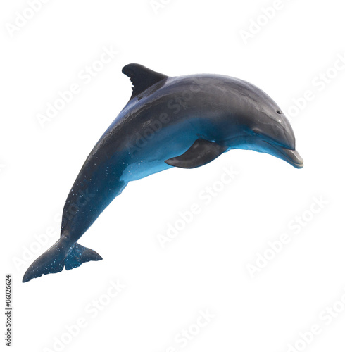 Canvas jumping dolphin on white