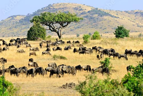 Carta da parati Masai Mara, Kenya