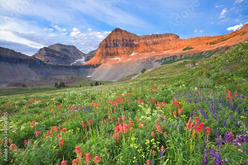 Fotografie, Obraz Colorful wildflowers on Mount Timpanogos, Utah, USA