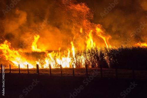 Obraz na płótnie Queimada em plantação de cana de açúcar