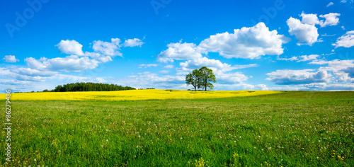 Beautiful summer landscape #86279486