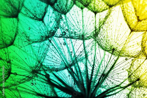 Obraz na płótnie Abstrakcja natury - makro ujęcie dmuchawca