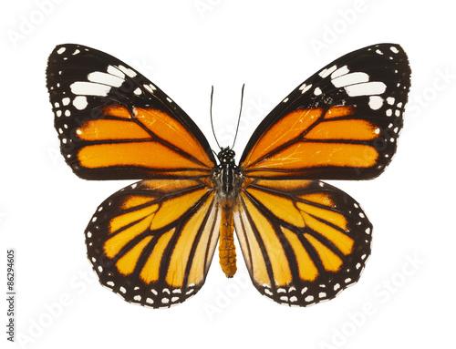 Carta da parati Butterfly