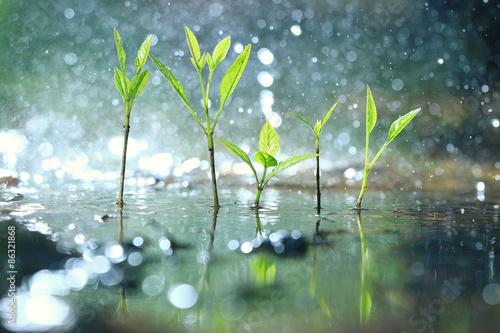 Wallpaper Mural grass dew rain macro fresh green eco