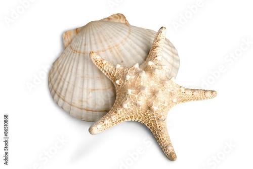 Fototapeta Sand Dollar, Starfish, Sand.