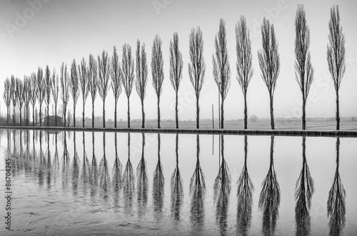 Alberi riflessi sul lago all'alba in bianco e nero Fotobehang