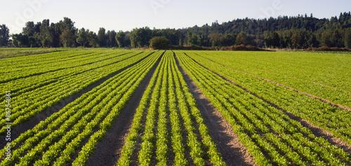Fotografía Planted Rows Herb Farm Agricultural Field Plant Crop