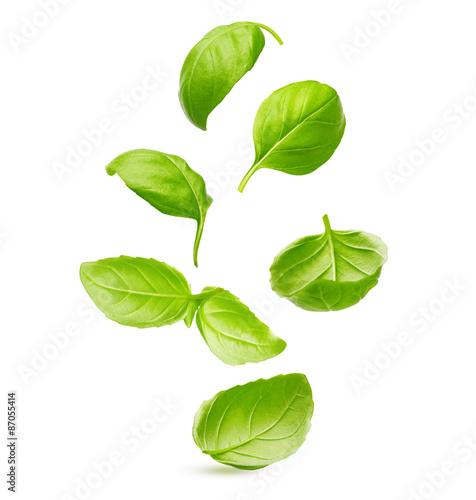 Basil leaves spice closeup Fototapete