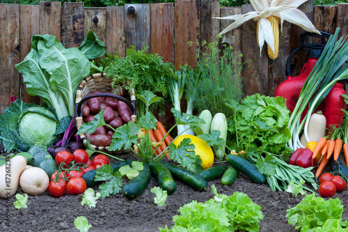Fotografia agriculture 2