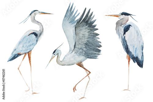 Fotografie, Tablou Watercolor heron birds