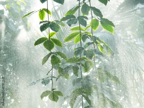 Canvas Print rain forest water splashes