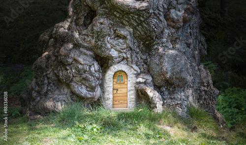 Photographie La casa nell'albero - The house in the tree