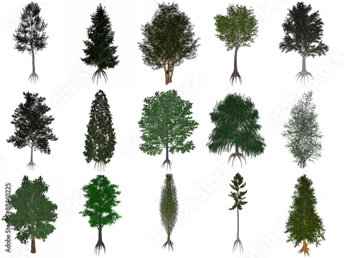 Obraz na płótnie Set or collection of common trees - 3D render