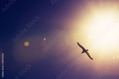 Seagull bird flying in the sky