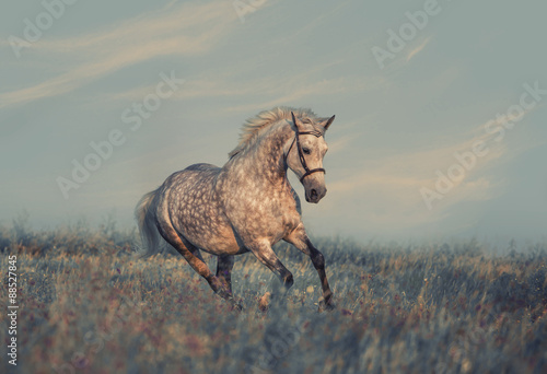 horse #88527845