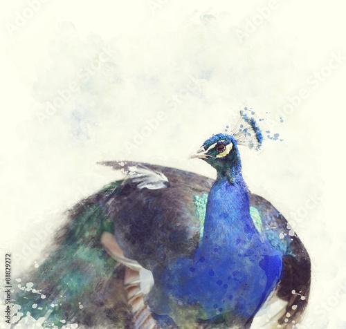 Indian Peafowl Watercolor