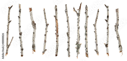 Collection dry branches birch isolated on white Poster Mural XXL