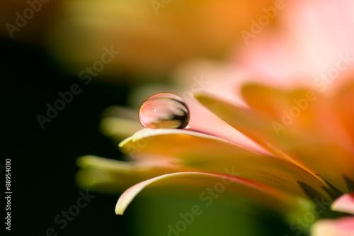 Orange flower and droplet