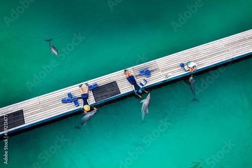 Obraz na plátne GOLD COAST, AUSTRALIA - MARCH 31, 2015 Dolphin in their enclosur