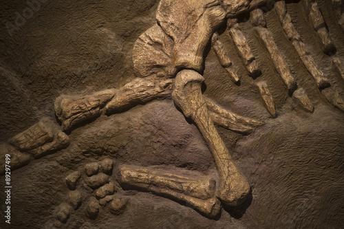 Fototapeta premium Skamielina dinozaurów