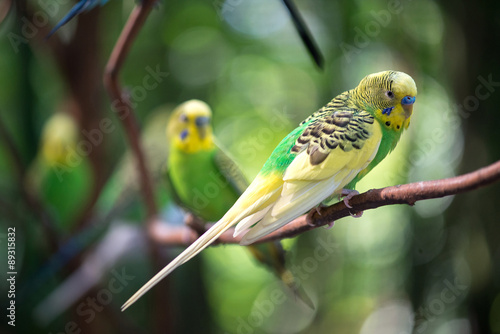 Photo Colorful parakeets resting on tree branch