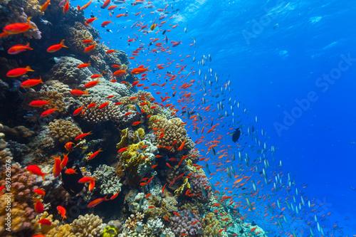 Carta da parati Underwater coral reef