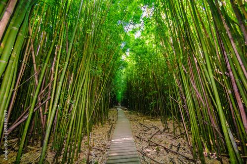 A wooden path through a dense bamboo forest, Maui, Hawaii, USA