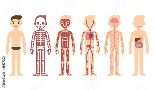 Foto Stylized male body anatomy chart: skeletal, muscular, circulatory, nervous and digestive systems