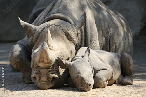 Fototapeta premium Nashornmama mit Baby