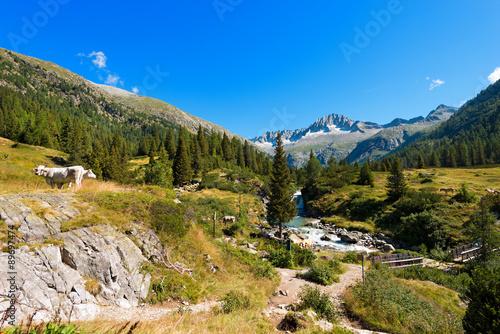 Obraz na płótnie National Park of Adamello Brenta - Italy / Peak of Care Alto (3462 m) and Chiese river in the National Park of Adamello Brenta seen from the Val di Fumo