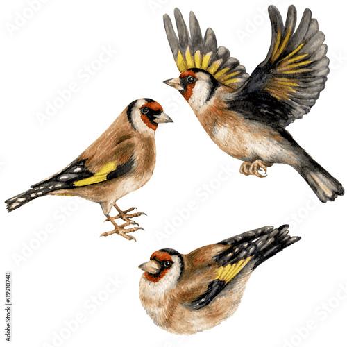 Goldfinches Fototapeta