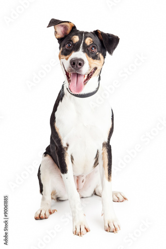 Canvas Print Happy Crossbreed Dog Sitting Mouth Open