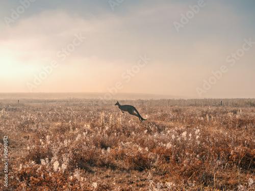 Kangaroo jumping in the mist