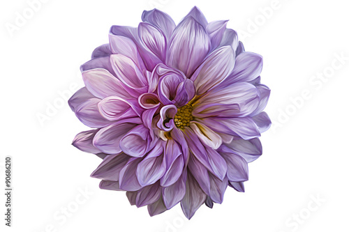 Canvas Print Drawing oil painting dahlia flower on a white background