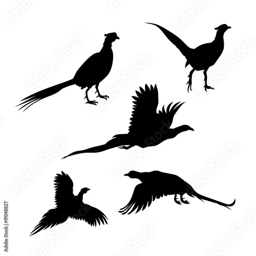Photo Bird pheasant vector silhouettes.