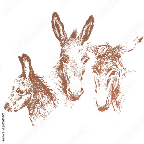 Obraz na płótnie Three donkeys