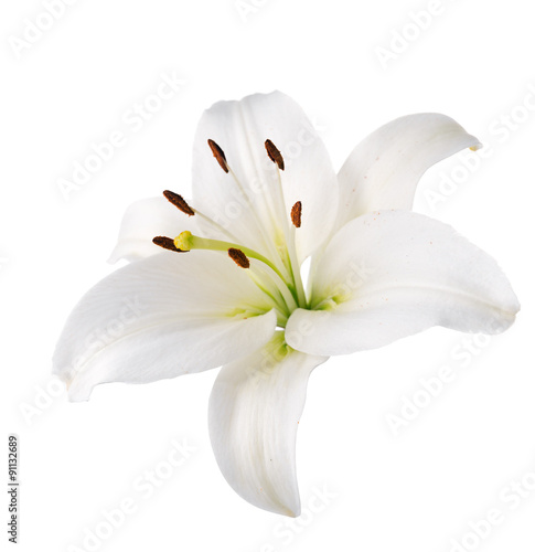 lily flower. Isolated.