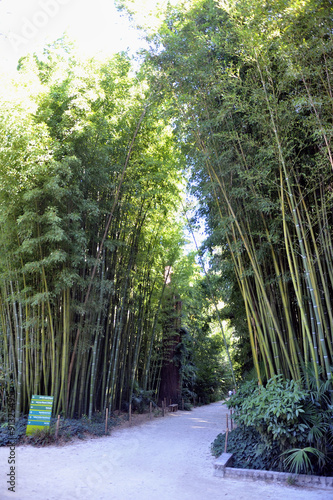 An alley of the park bamboo Anduze