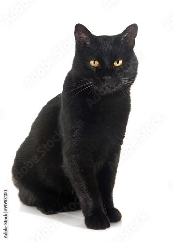 Stampa su Tela black cat