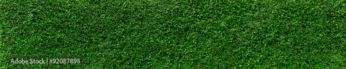 Photo Natural Green leaves wall background, No pattern